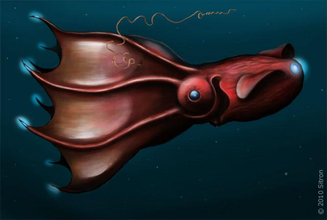 Адский вампир (Vampyroteuthis infernalis) (иллюстрация Citron/Wikimedia Commons).
