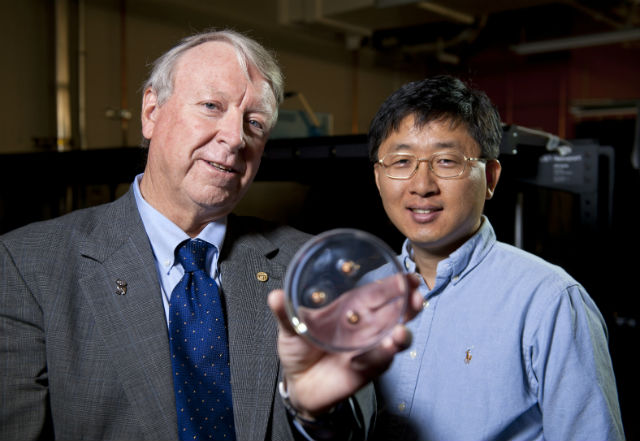 """Руководители исследования Нэд Томас (слева) и Чэ-Хвань Ли (Jae-Hwang Lee) демонстрируют три пули, которые остановил """"слоёный"""" материал (фото Tommy LaVergne, Rice University)."""