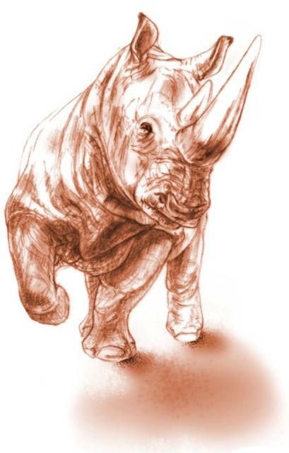 Так мог выглядеть доисторический предок белых и чёрных носорогов современности (фото Maëva J. Orliac).