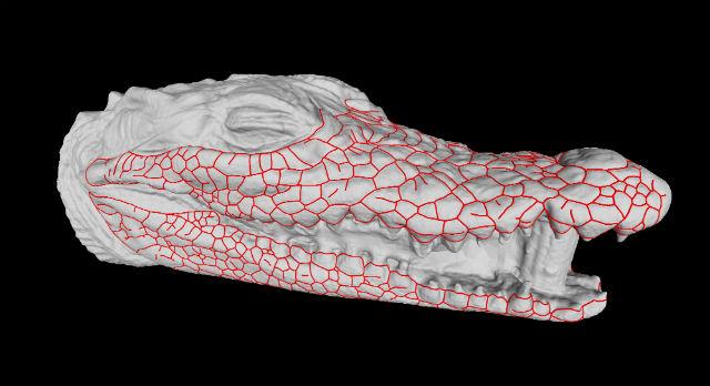 Трёхмерное изображение трещин на голове крокодила (иллюстрация Liana Manukyan, Michel Milinkovitch).