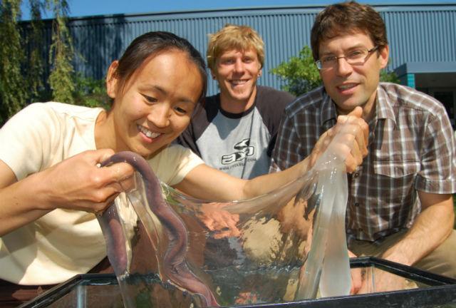 На фото Ацуко Негиси и её коллеги с объектом своего исследования — миксиной и её слизью (фото Comparative Biomaterials Lab).