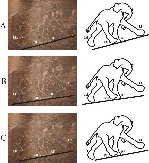 Доисторическое изображение слона. Три картинки показывают возможные варианты расположения плоскости земли относительно ног животного. При любом из них положение ног является неправильным (фото Luca Galuzzi, иллюстрации Horvath et al./PLOS ONE).