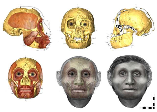 Процесс восстановления внешности ископаемого человека по черепу (иллюстрация Susan Hayes/University of Wollongong).