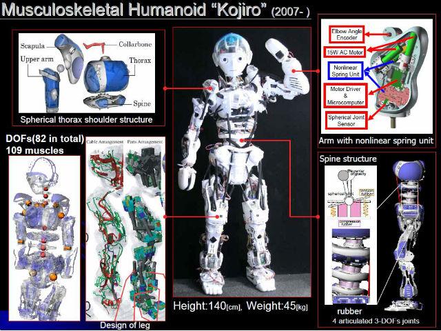 Предшественник Кэнсиро — гуманоидный робот Кодзиро (иллюстрация Yuto Nakanishi/University of Tokyo).