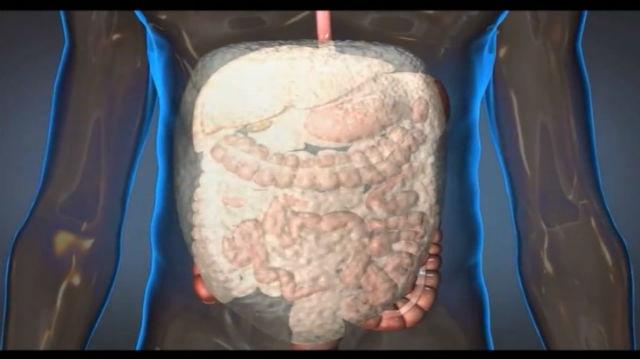 Пена заполняет брюшную полость и останавливает внутренние кровотечения (кадр из видео DARPA).