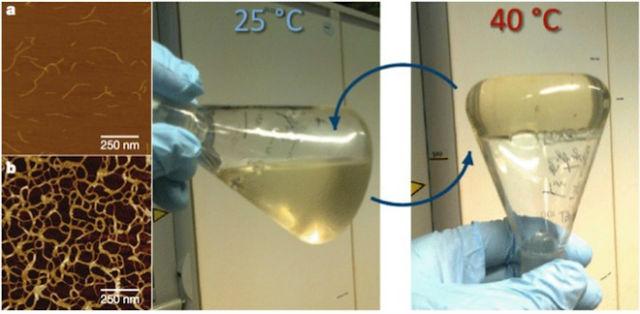 Отдельные полимерные цепочки (а) при нагревании образуют запутанную сеть (b), превращая жидкость в гель (иллюстрация Paul Kouwer/Nature).