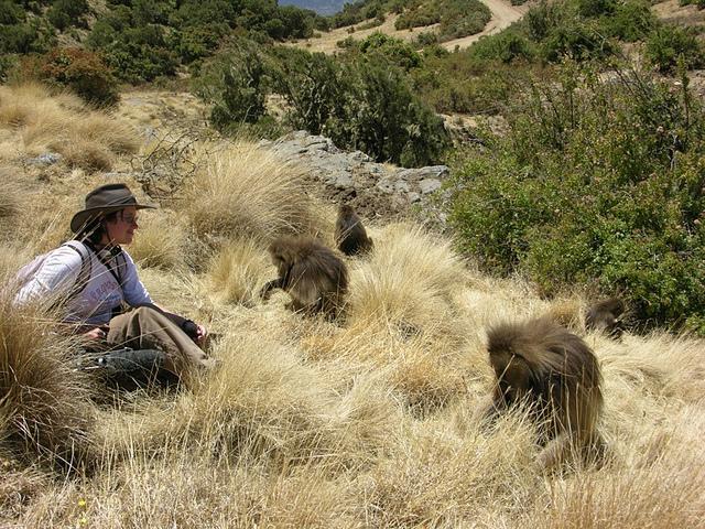 Ведущий автор исследования Ализа лё Руа ведёт наблюдение за несколькими геладами (фото Thore Bergman).