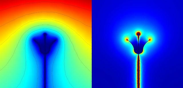 Электрическое поле вокруг цветка (справа) и картина распределения напряжения вокруг него (слева) помогают насекомому определить, где он найдёт больше сладкого нектара (фото Dominic Clarke).