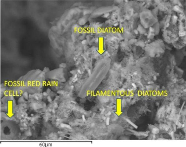 Фотография, полученная сканирующим электронным микроскопом, и структуры, которые были обнаружены учёными (фото с сайта journalofcosmology.com).