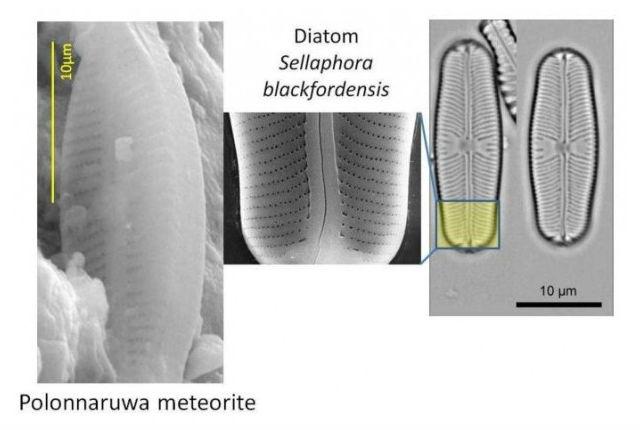 Сравнение окаменелых структур, обнаруженных учёными в метеорите, с известными на Земле диатомовыми водорослями (фото с сайта journalofcosmology.com).