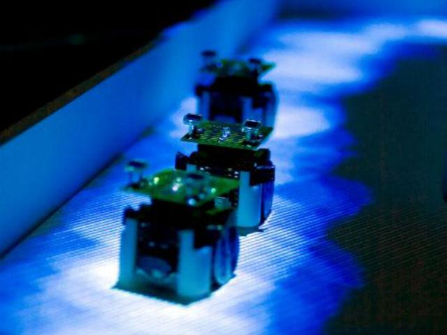 Роботы-муравьи в своём лабиринте выглядят как настоящее произведение искусства (фото PLOS Computational Biology).