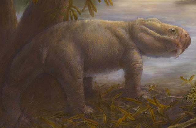 Воссозданный облик дицинодона (иллюстрация Marlene Donnelly/Field Museum of Natural History).