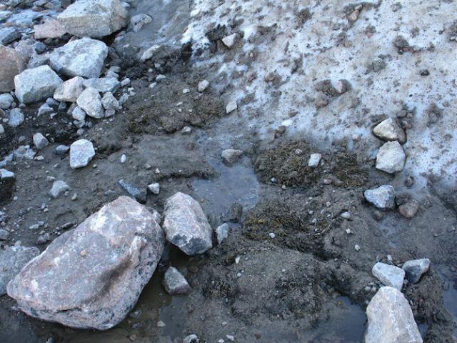 Граница ледника, где были обнаружены уникальные растения (фото Catherine La Farge).