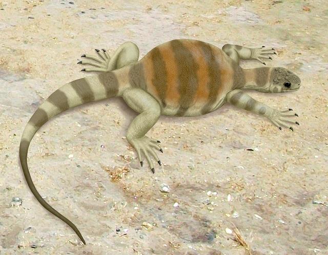Eunotosaurus africanus – предок современных черепах, имел удлиненные позвонки, Т-образные рёбра и очень слабые межрёберные мышцы (иллюстрация Smokeybjb/Wikimedia Commons).