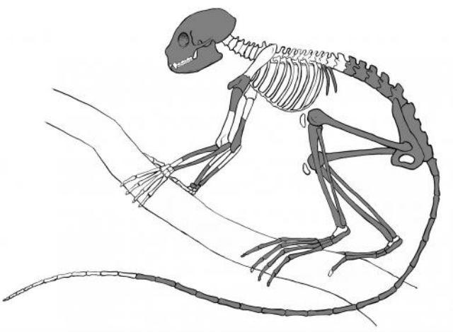 Картинки скелет животных