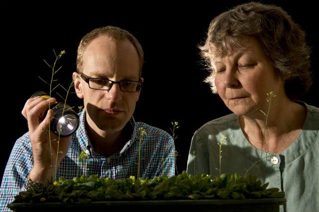 Авторы исследования Мартин Говард и Элисон Смит за работой (фото John Innes Centre).