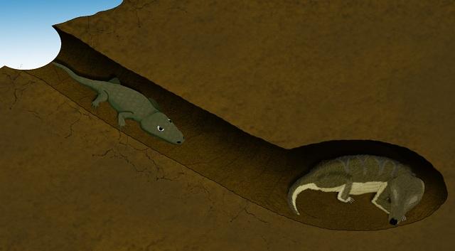Древняя амфибия проникла к предшественнику млекопитающих (иллюстрация ESRF/V. Fernandez).