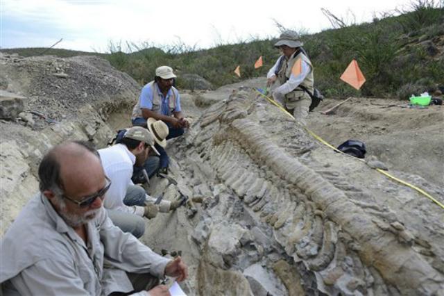 Палеонтологи работают на раскопках вблизи города Генерал Сепеда (фото AP Photo/INAH-Mauricio Marat).