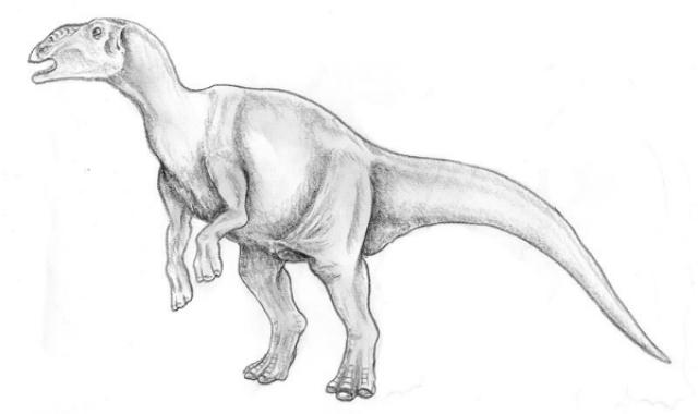 Предположительно, именно так выглядел гадрозавр (иллюстрация Ghedo/Wikimedia commons).