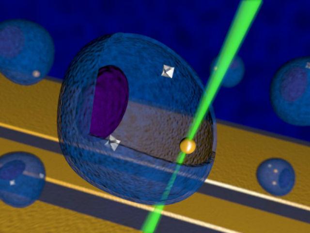 Зелёный луч лазера направили на частицу золота, чтобы та нагрела соседствующую область. В данном случае наноалмазы (обозначены серым) играют роль сверхчувствительных термометров (иллюстрация Georg Kucsko).