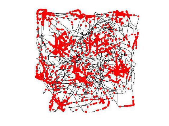 Запись активности grid-нейронов при перемещении крысы в замкнутом пространстве (иллюстрация Torkel Hafting/Wikimedia Commons).