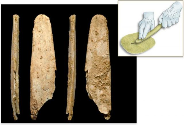 Окаменелости костяных орудий, которые, вероятно, использовались для обработки шкур животных (фото и иллюстрация Abri Peyrony, Pech-de-l'Azé I Projects).