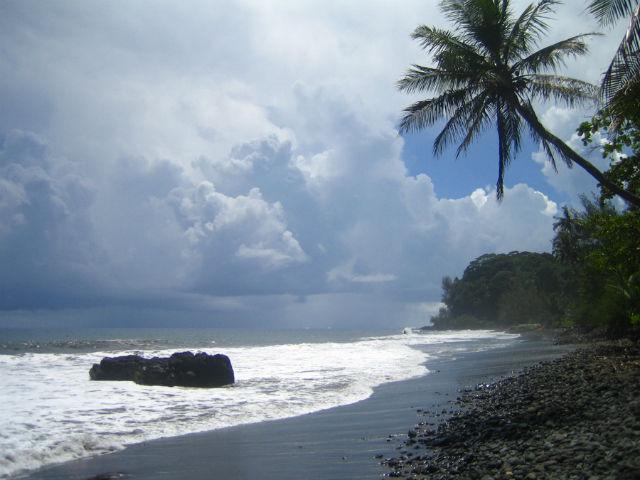 С.tahitiensis и C.taravao обитают на тихоокеанском остров Таити (фото FRED/Wikimedia Commons).