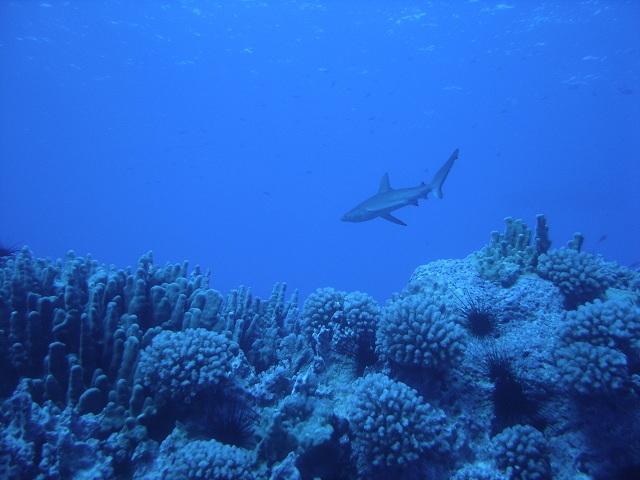 Биологи утверждают, что менее чем через сто лет многие морские животные вымрут (фото U.S. Fish and Wildlife Service Headquarters/Flickr).