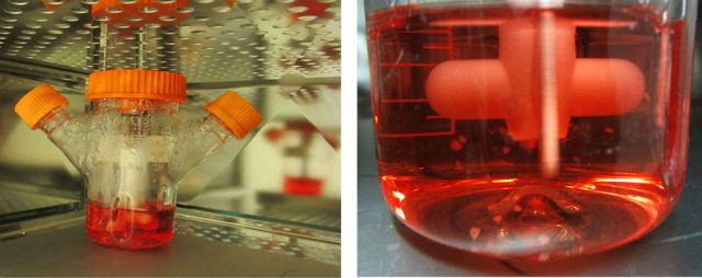 Органоиды в биореакторе (фото M. A. Lancaster/IMBA).