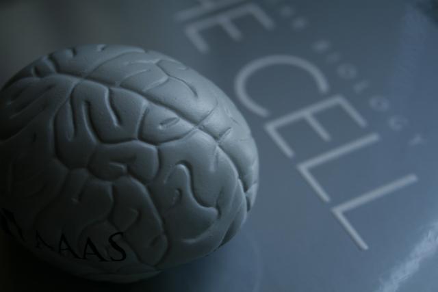 Возрастная потеря памяти связана с изменением молекулярных процессов в головном мозге (фото Jean-Etienne Minh-Duy Poirrier/Flickr).