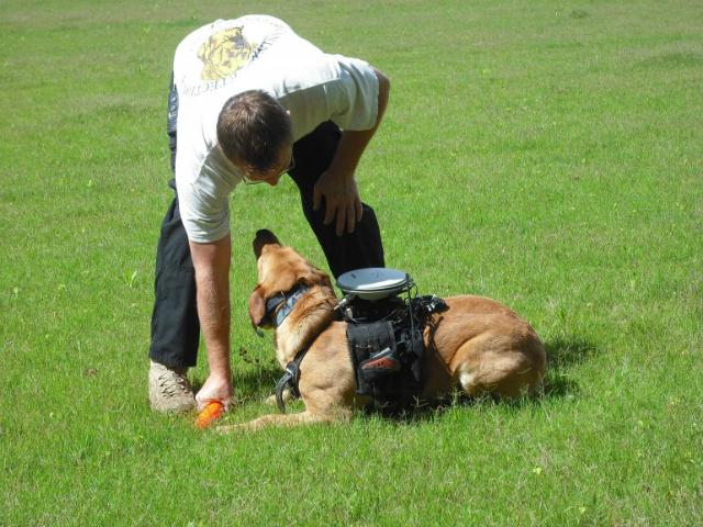 Система работает автономно, направляя собак по установленным GPS-точкам. Предположительно, в скором времени она сможет также использоваться для передачи команды, полученной от человека в реальном времени (фото Auburn University).