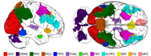 С помощью функциональной МРТ учёные выявили 11 областей мозга, вовлечённые в процесс формирования воображения (иллюстрация Alexander Schlegel).