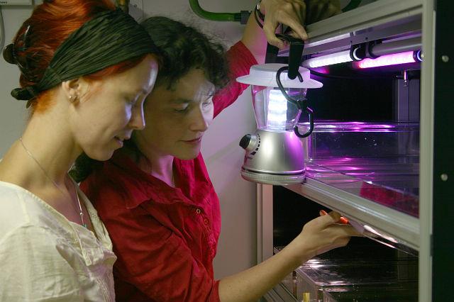В лаборатории Тессмар-Рабле (справа) и её коллеги регулировали освещение и смогли искусственно сбить червям лунные биоритмы, что, в свою очередь, повлияло и на их суточное поведение (фото Kristin Tessmar-Raible).