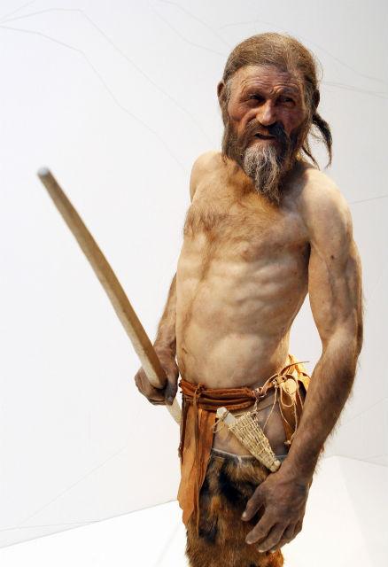 Тирольский человек был небольшого роста, имел светлую кожу, карие глаза и, согласно генетической экспертизе, являлся потомком жителей Корсики или Сардинии (фото Museo Archeologico dell'Alto Adige).