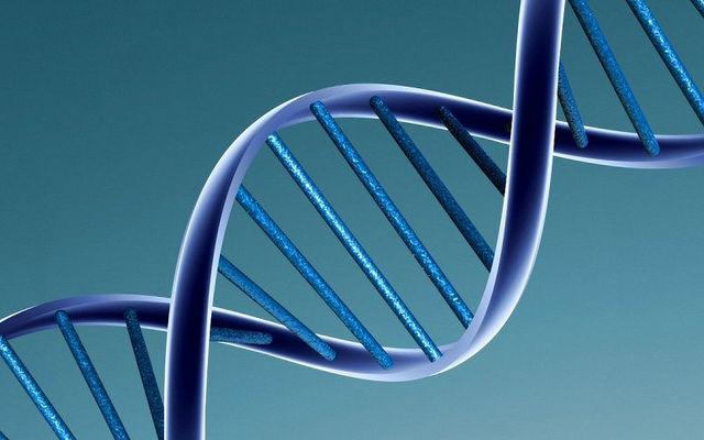 Посредством техники MAGE создаются фрагменты ДНК, которые при воздействии на них вирусных ферментов заменяют UAG-кодоны в РНК на UAA-кодоны (иллюстрация Caroline Davis2010/Flickr).