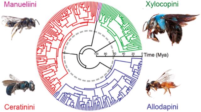 Хронограмма  популяции четырёх исследованных видов (изображение PloS ONE).