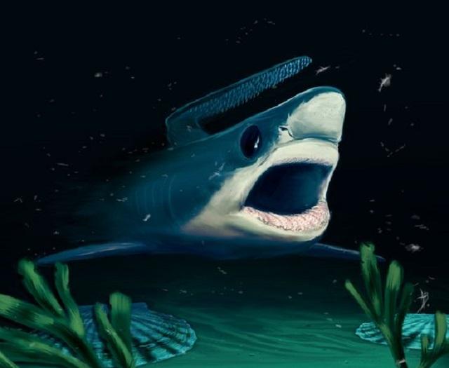 Реконструкция внешнего вида древней акулы (иллюстрация Alain Beneteau/Nature).