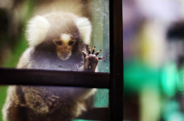 Даже те приматы, которые никогда не видели змей, инстинктивно боятся их и мгновенно реагируют на их изображения (фото Evan Blaser/Flickr).