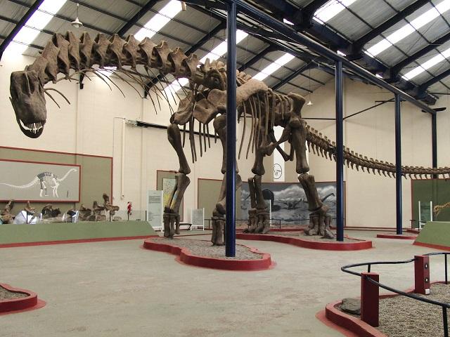 Аргентинозавр – крупнейшее позвоночное планеты, которое из-за своих размеров не имело естественных врагов (фото Bill Sellers/University of Manchester).