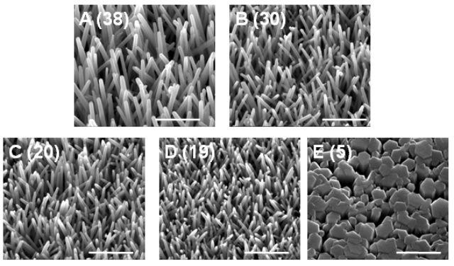 Нанотрубки оксида цинка, использованные для изготовления гибридных солнечных батарей (фото James Durrant).