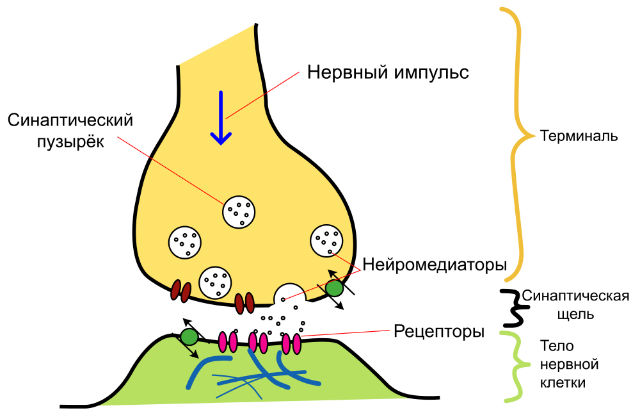 синаптического транзистора