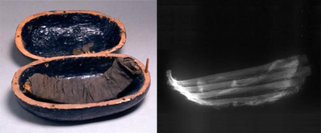 Говяжьи рёбрышки, мумифицированные в XIV веке до н. э., из гробницы Юи и Туи (фото Clark et al./PNAS).