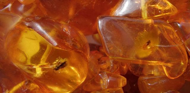 Янтарь хранит в себе удивительную информацию об истории древней Земли (фото Brocken Inaglory/Wikimedia Commons).