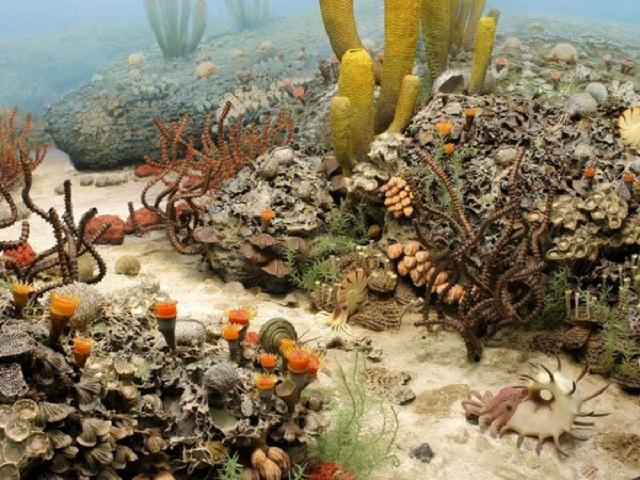 Во время пермского вымирания погибло от 93% до 97% всех морских обитателей (иллюстрация University of Michigan Exhibit of Natural History).