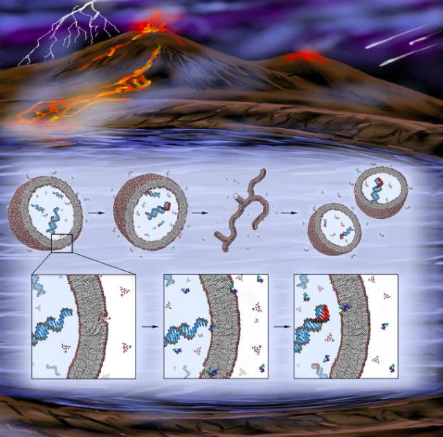 РНК была первой генетической молекулой