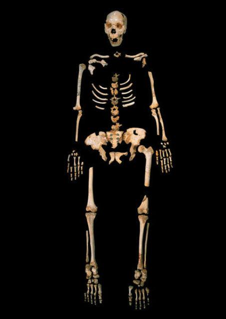 Скелет древнего представителя рода Homo, геном которого удалось секвенировать (фото Javier Trueba, Madrid Scientific Films).