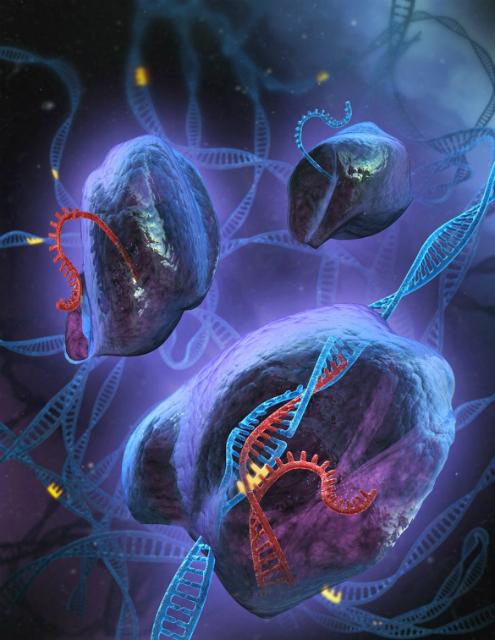 Новая технология позволит редактировать генетическую информацию словно компьютерный код (иллюстрация MIT).