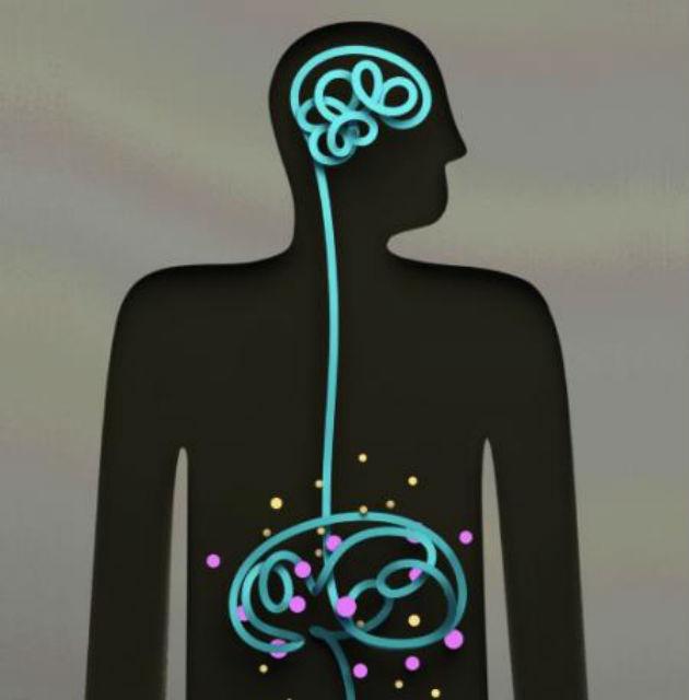 Все системы организма взаимосвязаны: микрофлора кишечника влияет на мозговые функции и поведенческие расстройства (иллюстрация Elaine Hsiao).