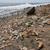 """Из-за сильной загрязнённости Северное тихоокеанское течение получило неформальное прозвище """"северный тихоокеанский мусорный поток"""""""