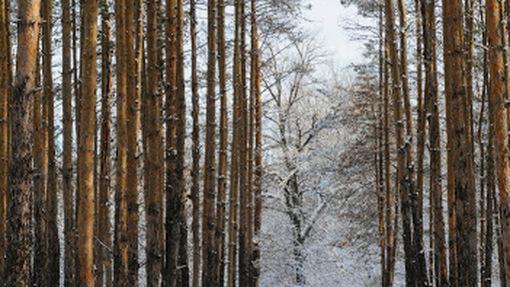 Автор: Андрей Сомов